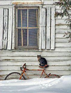 Cat on a bike  rustic window