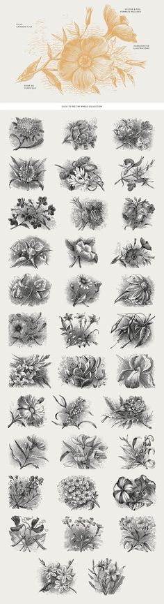 35 Plant & Flower Illustrations No.2 by Vector Hut on @creativemarket #flowers #vintage #clipart #botanical #botanicalillustration #artwork #floral #illustration