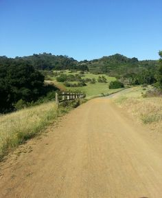 Fremont Older Open Space Preserve: near Saratoga, dogs ok on all trails!