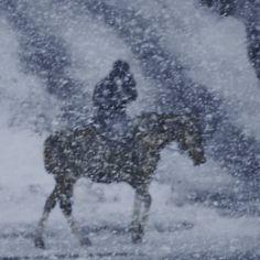 "Photography, ""The Snow Horse"" Buy Prints, Digital Photography, Saatchi Art, Snow, Horses, Artist, Horse Art, Switzerland, Paper"