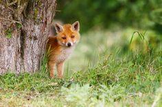 Cutie! by Pim Leijen