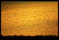 Birds, 8.8.2007, Poland by Sesjusz.deviantart.com on @DeviantArt