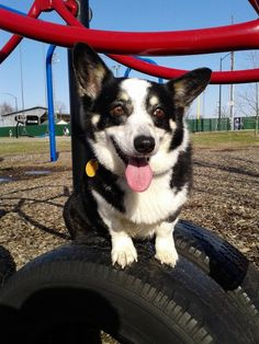 Cute photos of pets on the playground and tips for taking your pet to the park.