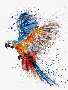 Coloreado a mano loro aves Splash, Pintado A Mano, Color, Splash Imagen PNG