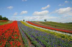 美しい花が織りなす「パッチワークの丘」を求めてたくさんの旅人が訪れる富良野・美瑛。四季彩の丘には、富良野を象徴する花「ラベンダー」の他、数十種類の花がならだかな丘に帯状に連なり、春から秋まで目を楽しませてくれます。