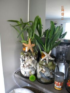 Large glass jars filled with shells and beach stones, then orchid plants are set in the openings.