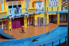 We recently saw the hilarious new Sea Lion show at SeaWorld Orlando. Clyde and Seamore's Sea Lion High show is a really entertaining High-. Disney Travel, Disney Trips, Seaworld Orlando, Sea World, Travel Tips, Lion, Entertaining, Leo, Travel Advice
