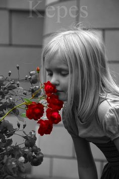 Red Splash of Color - Stop and Smell The Roses...
