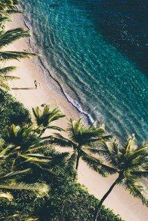 fond, plage, nues, océan, palme