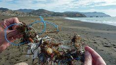 plastic garbage found in ocean, click through