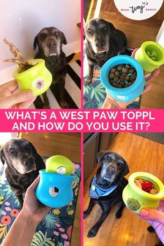 The West Paw Toppl is a stuffable dog toy with a wide opening that's perfect for filling with your dog's food, treats and natural chews. The durable zogoflex rubber can be frozen to make the treat-stuffed toy last longer or be more challenging for your dog. I'm excited to share more about this great toy and some of the fun ways you can use it including a slow feeder puzzle and bully stick holder! Since the opening is so wide, the Toppl is a great toy for dogs who are new to interactive toys. Up Dog, Dog Mom, Slow Feeder, Bully Sticks, Chocolate Labs, Pet Supply Stores, Labrador Retrievers, Interactive Toys, Stuffed Toy