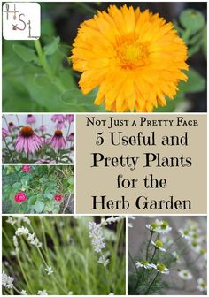 5 Useful and Pretty Plants for the Herb Garden - Fill the herb bed with these 5 useful and pretty plants.