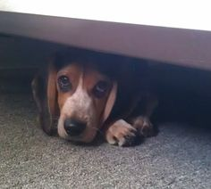 hiding pupster