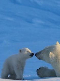 """""""You . . . Mom, tell times: am I your little droll favorite polar bear? Forever?"""""""