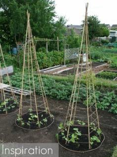 Garden / DIY Build and Install a Raised Garden Beds - CotCozy