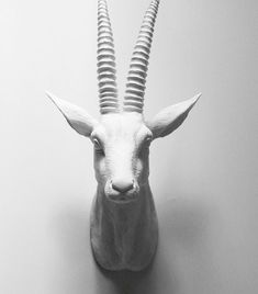 Antelope, Faux Taxidermy, African Decor, Faux Deer Head, Hodi Home Decor, Faux Taxidermy Australia, African Animal Head, White Antelope Head on Etsy, $92.00