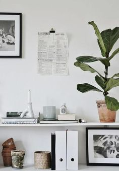 White shelf with stacked books, plant life, and unique decorative objects