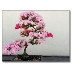 Pink Bonsai Tree Postcard (sold - Spain) Thank you!