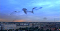 10 Million Common Starlings Fly In Unison To Create Astounding Unique Aerial Patterns While Migrating To Rome.