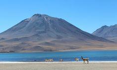 Laguna altiplanica, San Pedro de Atacama, Chili