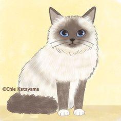 Cats works - Chie Katayama Illustration My Tom, Eye Art, Big Eyes, Paintings, Flat, Wall Art, Illustration, Cute, Animals