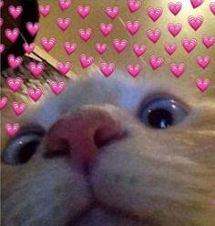 Os Heart Memes Dominarão o Mundo Cute Cat Memes, Cute Animal Memes, Cute Love Memes, Funny Cats, Cute Baby Animals, Funny Animals, Meme Chat, Cute Cat Wallpaper, Animal Wallpaper