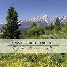 Planning a summer trip to the Tetons? Here are some ideas for hikes right outside our lodge.