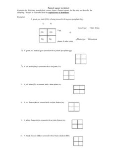 Printables Punnett Square Worksheet squares and middle on pinterest punnett square worksheet by kpolson via slideshare