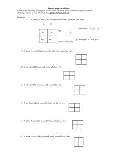 Punnett Square Practice Worksheets - Tecnologialinstante