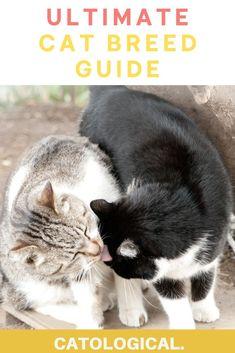 500 Cat Breeds Ideas In 2021 Cat Breeds Popular Cat Breeds Most Popular Cat Breeds