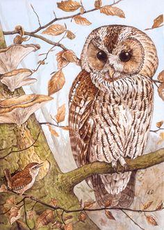 Tawny Owl and Wren - Artwork by Ed Hazebroek.