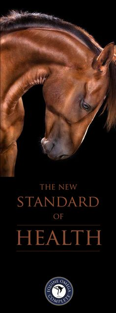 APHA... Supplement like you mean it. Click more to learn about the new standard of complete supplements and how it can benefit your horse. $59.95 per month. www.o3animalhealth.com