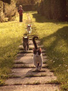 猫のきれいな画像を貼るよー(続き4):ハムスター速報