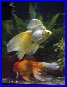 Goldfish and aquarium board website, great place to find information to keep your pet fish happy! Helpful forums too. ***  Sadly, the person over is has passed away.***