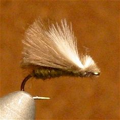 » CDC Caddis Dry Fly - Fly Fishing & Fly Tying Information Resource