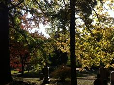 Fall at Greenwood Cemetery. Greenwood Cemetery, Fall, Plants, Beautiful, Autumn, Fall Season, Plant, Planets