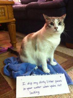 My roommates cat, Cat shaming =]  -Kimmy Ross