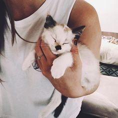 I WANT this beautiful kitten!