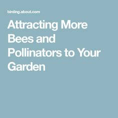 Attracting More Bees and Pollinators to Your Garden