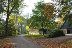 Mooie herfstdag in het Westersebos #Schoonebeek. Vakantiewoning Erve Ensink #Drenthe