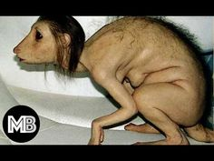 13 Most Mysterious Creatures In The World !