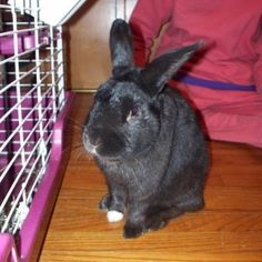 Meet Avery, a Rabbit from Mentor, OH, United States