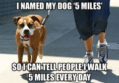 Remember pets need exercise too!