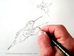 learn to sketch, free sketching demo