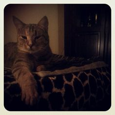 Jeanie Cats, Animals, Gatos, Animales, Animaux, Animal, Cat, Animais, Kitty