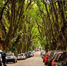 Бразилия. Зеленая улица в городе Порту-Алегри. Источник: Adalberto Cavalcanti Adreani