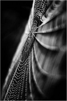 macro photography black and white Macro Photography Tips, Texture Photography, Close Up Photography, Abstract Photography, Artistic Photography, Creative Photography, Black And White Photography, Fine Art Photography, Amazing Photography