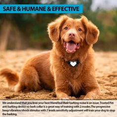 @page { margin: 0.79in } P { margin-bottom: 0.08in } ❌ Safe & Humane & Effective: Free bark training E-book included! We understand that you love your best friend but their barking noise is an issue. Trusted Pet anti-barking device no bark collar is a great way of training with 2 modes. The progressive beep/vibration/shock stimulus with 7 levels sensitivity adjustment will train your dog to stop the barking. ❌Smallest Bark Collar In the Market: Suitable for all sizes also Dog id tag incl Love You Best Friend, Best Friends, Anti Bark Collar, All Types Of Dogs, Running In The Rain, Stop Dog Barking, Dog Shock Collar, Dog Id Tags, Training Your Dog