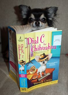 www.ObsessiveChihuahuaDisorder.com: Book Review: Dial C for Chihuahua