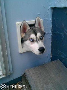 Hahaha! That look! Lol